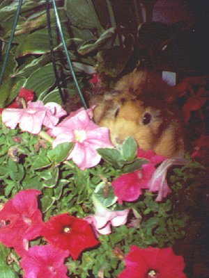 Roddy blossom
